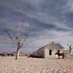 Wild horses - Namibia